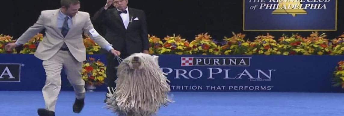 The National Dog Show in Philadelphia