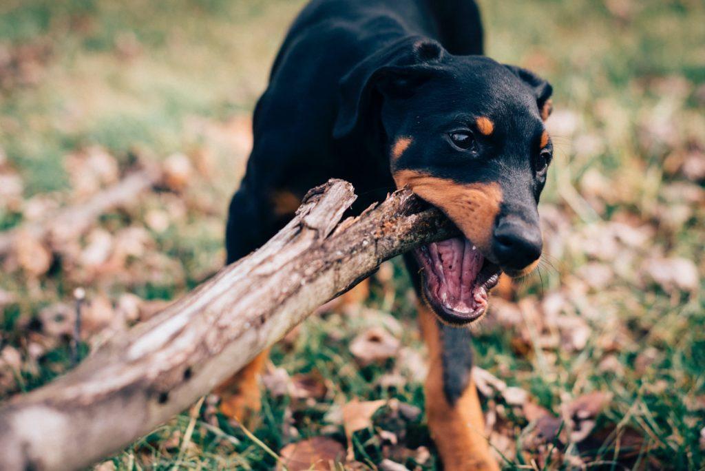 Philadelphia Dog Bite Lawyer